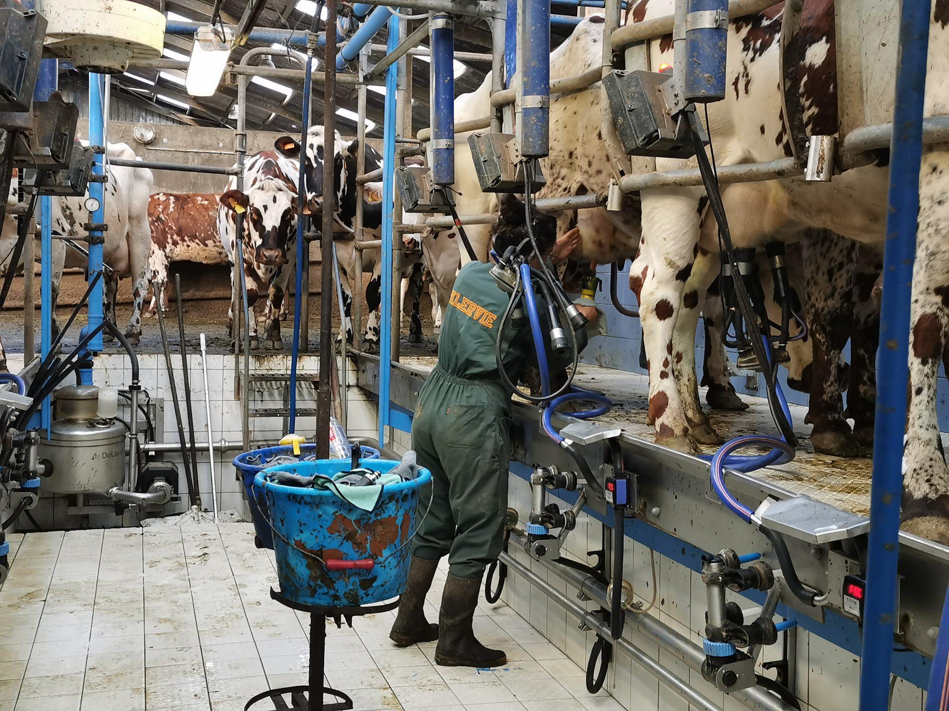 atelier lait